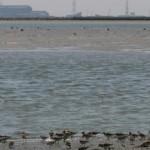 Semana dedicada a los Pájaros