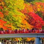 Dicias de passeio de outono