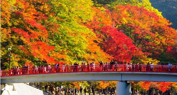Foto cedida pelo Asuke Kanko Kyokai