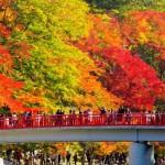 Cây lá đỏ 紅葉狩り