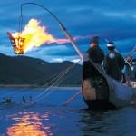 Chim cốc bắt cá(鵜飼)